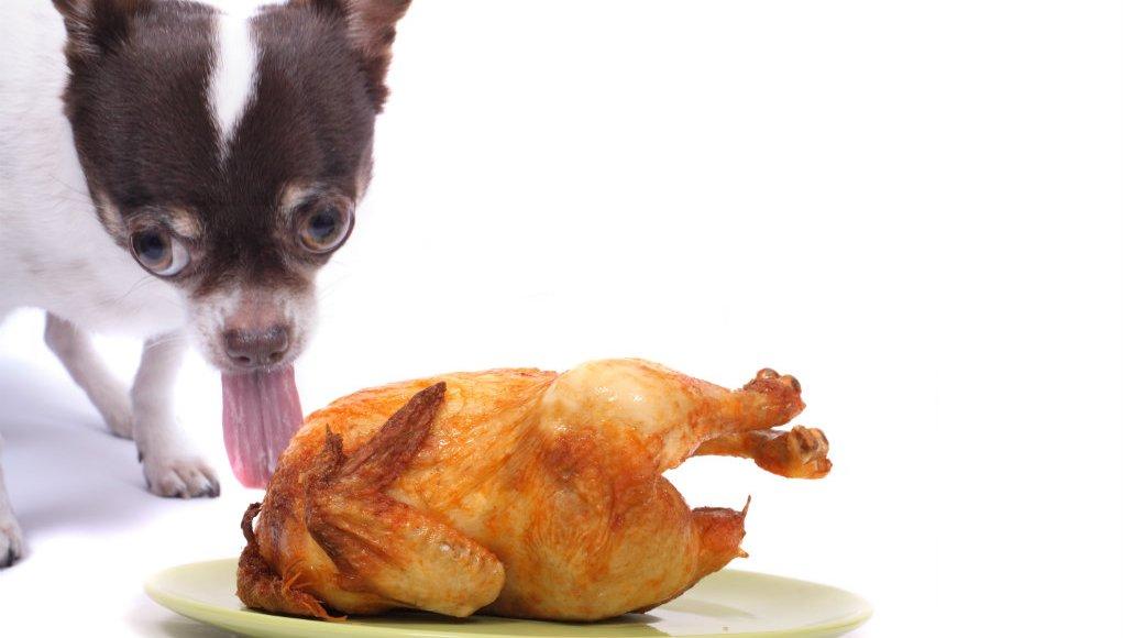 Sharing Thanksgiving Dinner with Dogs