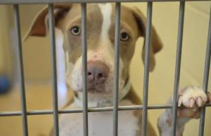 Zappos Wants to Buy You a Shelter Dog