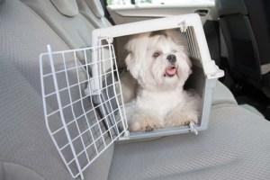 dog travel in a car in a dog crate