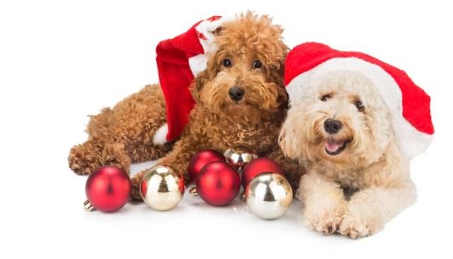 Dog Christmas Ornaments Safety