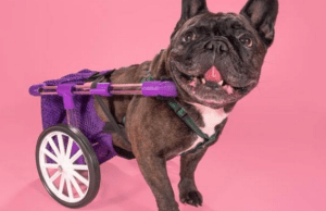 Anyone With a 3D Printer Can Make This Adjustable Dog Wheelchair