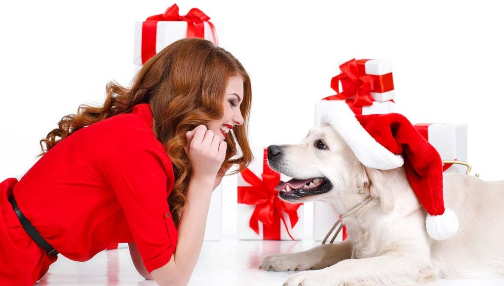 Best Christmas Gifts for Dog Parents