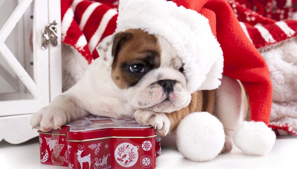 Best Christmas Gifts for Dogs That Last