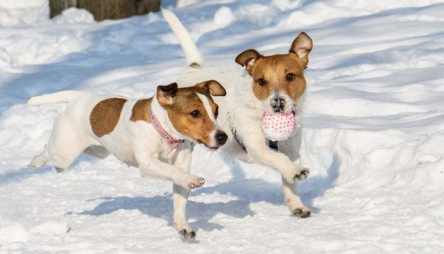 Best Dog Toys with Treats for Christmas
