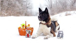 Best Knock-about Dog Toys for Christmas