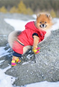 Best dog winter boots care and tips