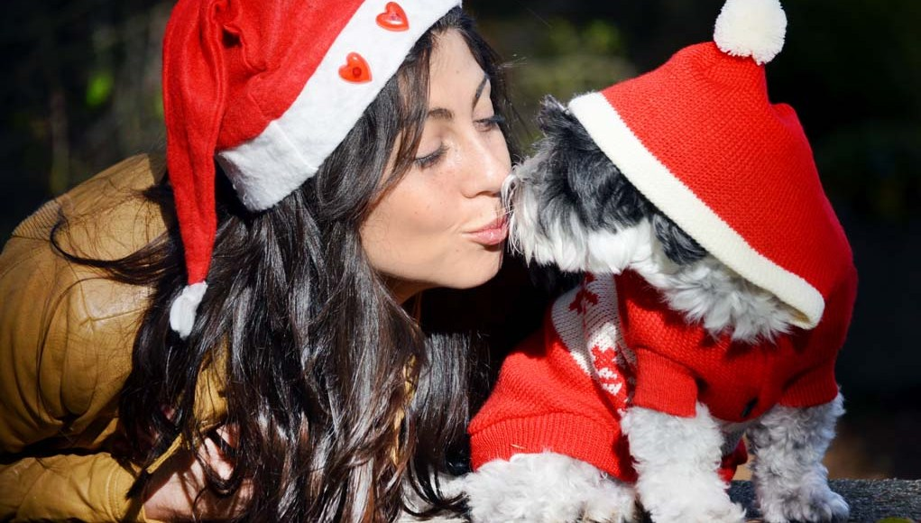 Christmas DIY Gifts for Dog Lovers
