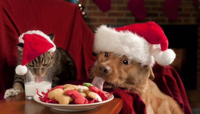 Christmas foods for dogs