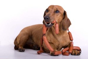 Fats in Dog Food for Dogs with Diabetes