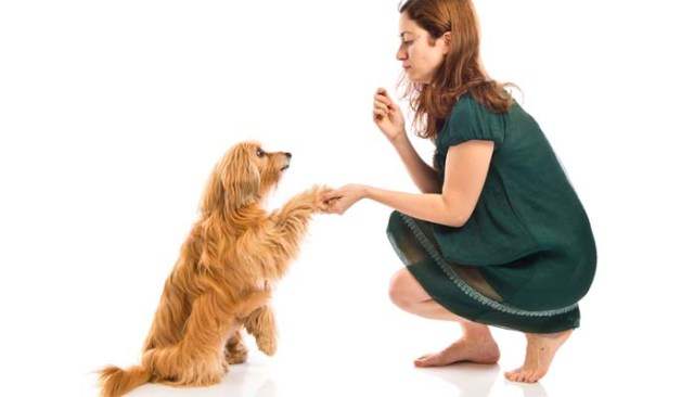 Further dog obedience training