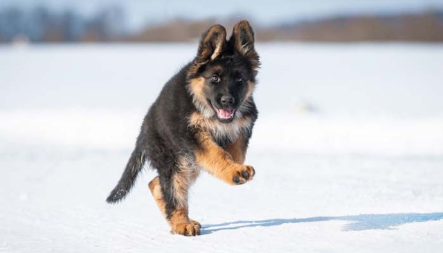 Gifted Puppy Will Help Fight Terrorism in France