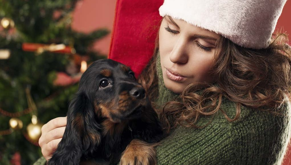 Ideas on How to Spend Christmas with Your Dog
