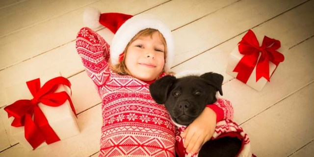 Last Minute Christmas DIY Gifts for Dog Lovers