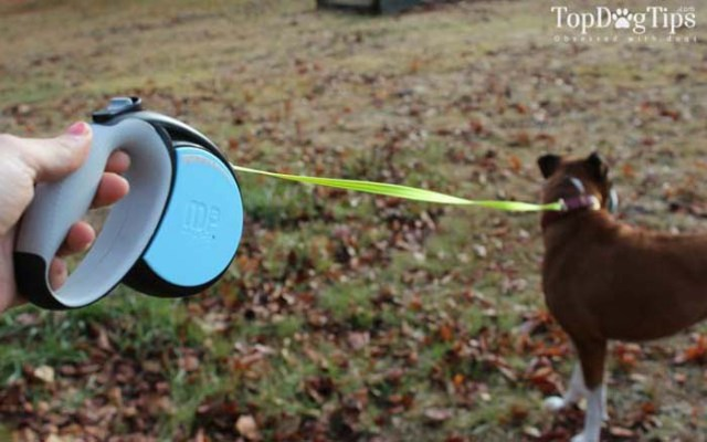 MIU Retractable Dog Leash Review for Dogs