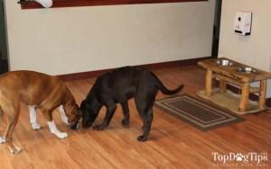 Petzi Review - Petzi Treat Cam for Dogs Review