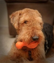 Squeaker Dog Toys as Best Christmas Gifts for Dogs