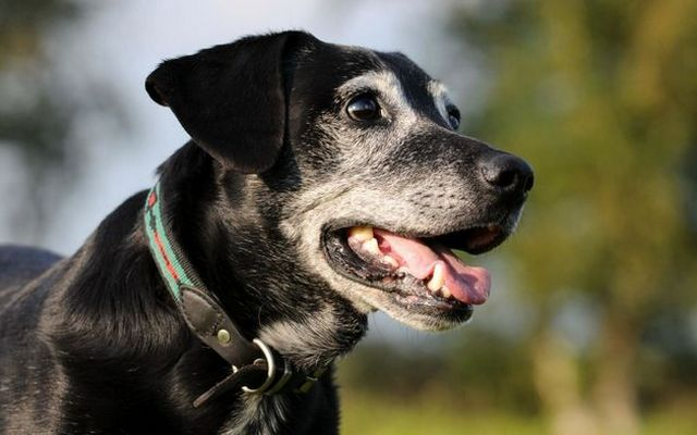 This Drug Could Help Your Dog Live Four Extra Years