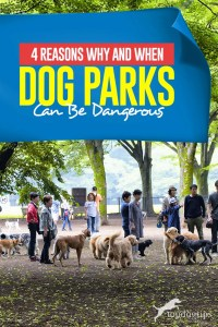 Top 4 Reasons Why and When Dog Parks Can Be Dangerous