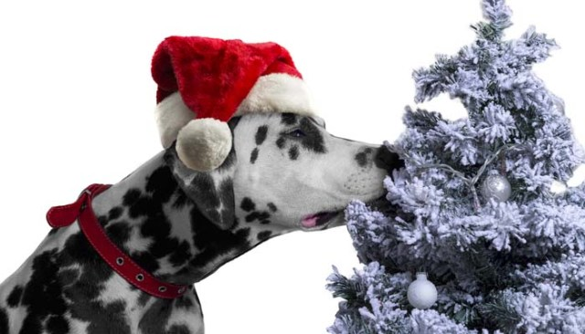 What are the best Christmas gifts for dogs