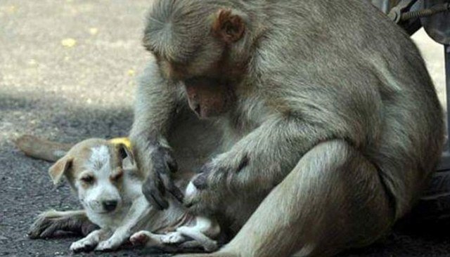 Aww...This Monkey Adopted a Homeless Puppy