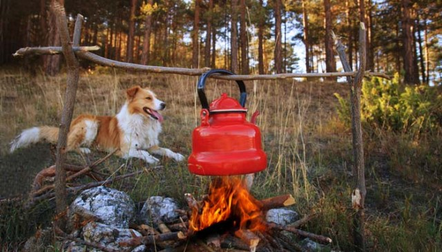Camping dogs near the campfire