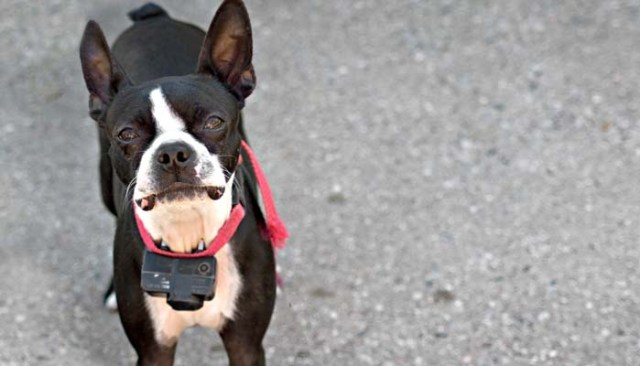 Look at using the best dog training collars for dogs