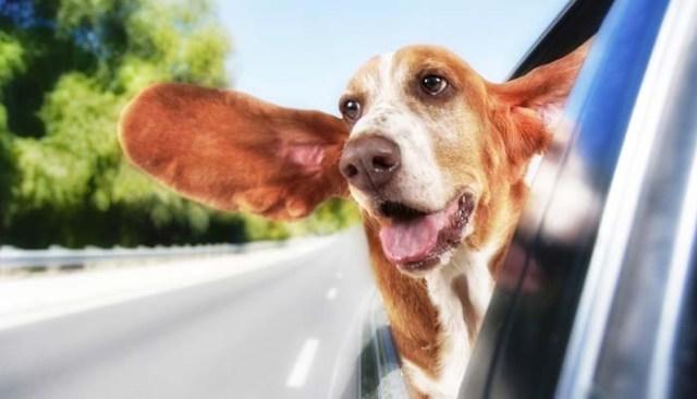 Shipping a Dog by Car
