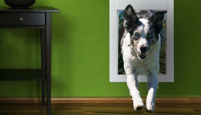 The Convenience of Electronic Dog Doors