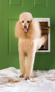 The Convenience of Electronic Pet Door for Dogs