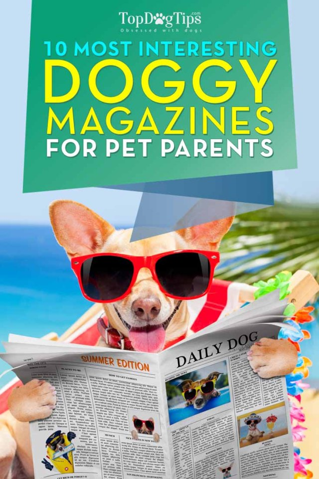 Top 10 Dog Magazines for Pet Owners