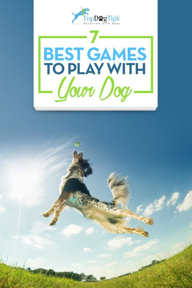 Top Best Games to Play With Dogs
