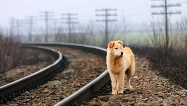 Why dogs get lost and how to find them