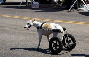 making life easier for a disabled dog