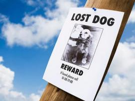 A Runaway Dog Prompted The Creation of This New Smartphone App