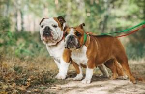 Adopting a Second Dog