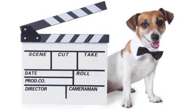 Best Dog Movies Streaming