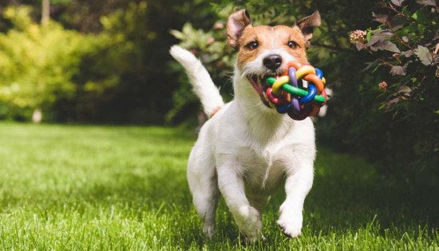 Best Games to Play With Your Dog