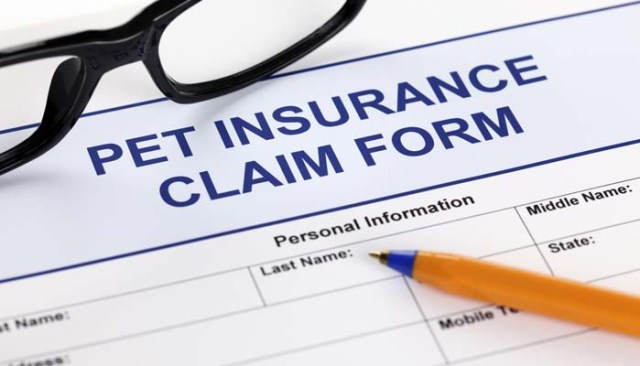 Best Pet Insurance Comparison - What is the Best Dog Insurance for Pets