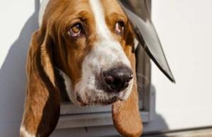 Best Screen Doors with Dog Door Reviews