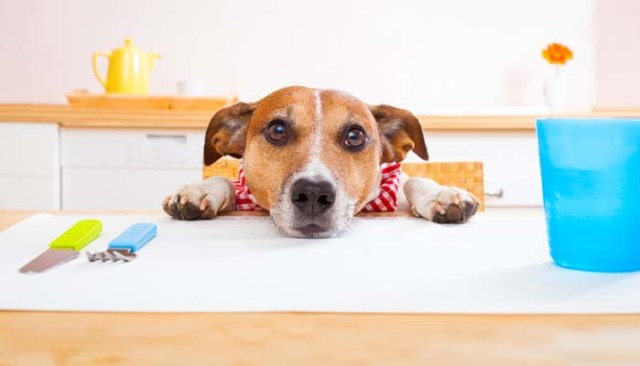 Dog Begging Behavior and How to Stop It