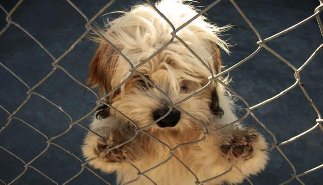 Georgia Looking to Adopt Canine Mascot