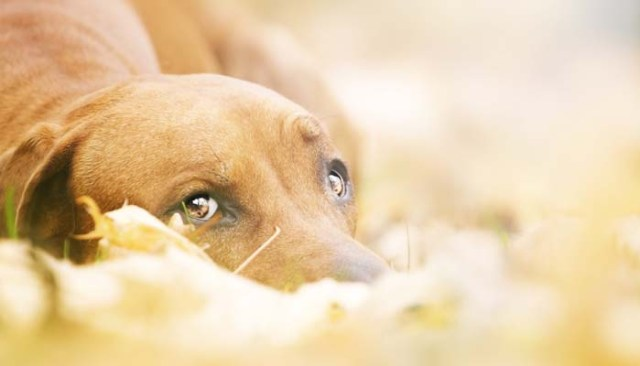 How to Take Great Photos of Your Dog And Do it Great