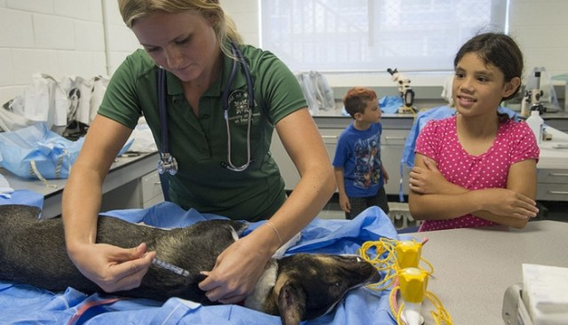 New Groundbreaking Canine Cancer Vaccine Shows Promise