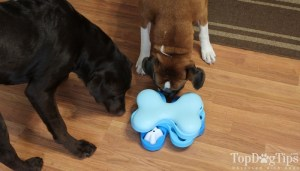 Nina Ottosson Puzzle Toys for Dogs Review