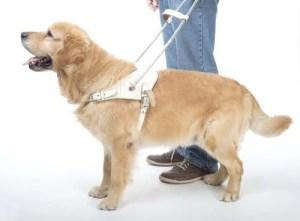 Service Dog Gear Harness