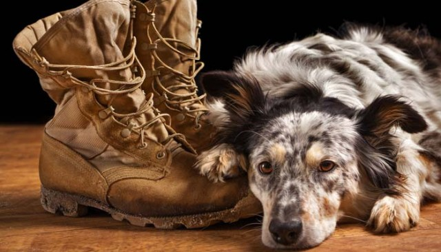 Service Dog Gear for Dogs