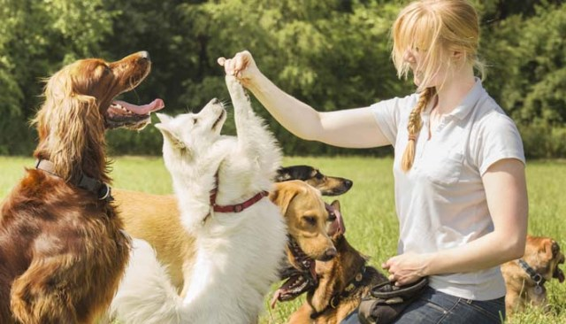 The Benefits of Hiring a Pet Sitter for Dogs
