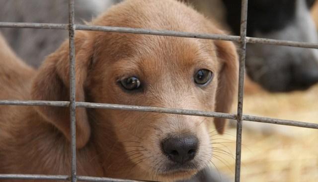 Three Year Partnership Helps 1 Million Shelter Animals