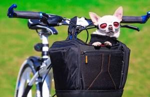 Top 5 Best Dog Basket for Bike Reviews