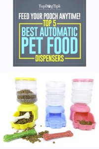 Top Best Automatic Dog Food Dispenser